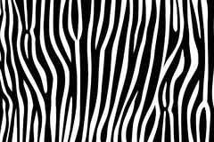 Van het de tijger de gestreepte bont van de patroontextuur safari van de de streep zwarte wildernis witte vector illustratie