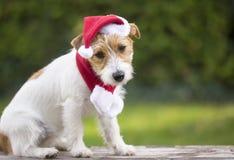 Van het de verrassingspuppy van de Kerstmisgift het huisdierenhond met Kerstmanhoed stock afbeelding