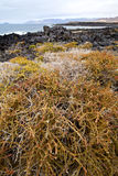 van het de vijverwater van de bloemtak de abstracte hemel van de de rotssteen en summe Stock Fotografie