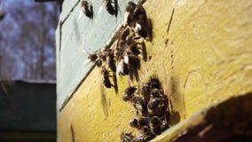 Van het de vliegproces van het bijenwerk de bloemnectar in honing stock videobeelden