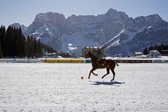 Van het de winterpolo van Cortina de kop 2008 Royalty-vrije Stock Afbeelding