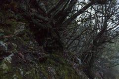 Van het de wortelmos van de bergscène de donkere vochtige grond stock foto's