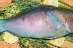 Van het het fragmentstuk van de stempelvin kleurrijke blauwe tropisch van de de ruwe vissenpapegaai Royalty-vrije Stock Afbeelding