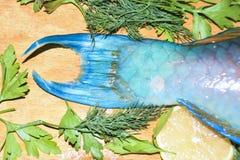 Van het het fragmentstuk van de stempelvin kleurrijke blauwe tropisch van de de ruwe vissenpapegaai Stock Afbeelding