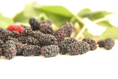 Van het het fruitvoedsel van Blackberry rood van de de vitamine heerlijk landbouw Sao Paulo Brazil royalty-vrije stock afbeeldingen