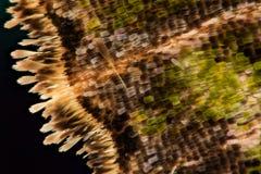 Van het het detailpatroon van de vlindervleugel de textuurachtergrond Royalty-vrije Stock Fotografie