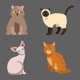 Van het het huisdierenportret van het kattenras het leuke van de het beeldverhaal dierlijke en mooie pret pluizige jonge aanbidde Stock Foto's