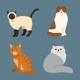 Van het het huisdierenportret van het kattenras het leuke van de het beeldverhaal dierlijke en mooie pret pluizige jonge aanbidde Stock Afbeeldingen