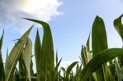 Van het het Landbouwbedrijfgraan van het land het Gebiedszaken Royalty-vrije Stock Fotografie