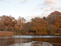Van het het landschapsmeer van de herfstbomen de bezinningen van het land in watereenden Royalty-vrije Stock Afbeelding