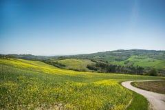 Van het het landschapsplatteland van Toscanië het gebiedsaard Italië royalty-vrije stock afbeeldingen