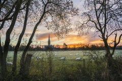 Van het landschapssalisbury van de de winter ijzige zonsopgang de kathedraalstad in Engeland Stock Foto's