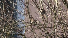 Van het Leven van Vogels stock video