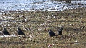 Van het Leven van Vogels stock footage