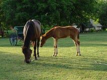 Van het moederpaard en Veulen het weiden in de weide royalty-vrije stock foto