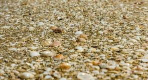 Van het overzeese shells kustzand stock afbeelding