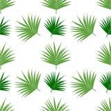 Van het palmbladpatroon naadloze vectortegel als achtergrond, tak van de kokospalm Vector illustratie royalty-vrije illustratie