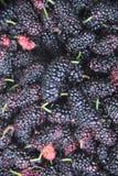 Van het het sapfruit van Blackberry rood van de het voedselvitamine heerlijk de landbouwsao Paulo Brazil stock afbeelding