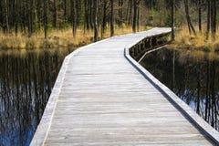 Van het water aan het bos stock fotografie