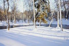 van het zonlichtbomen van de de wintersneeuw de hemelpark Royalty-vrije Stock Afbeeldingen