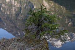 Van het Zuid- meerdobbiaco van bezinnings klein bomen het dolomiet toblach Tirol Italië Royalty-vrije Stock Foto's