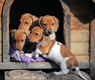 Van hond-kennel de dag tekkelpuppy stock afbeeldingen