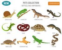 Van huisdierenreptielen en amfibieen pictogram vastgestelde vlakke die stijl op whit wordt geïsoleerd Royalty-vrije Stock Afbeelding