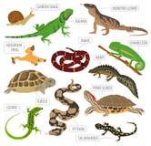 Van huisdierenreptielen en amfibieen pictogram vastgestelde vlakke stijl op whit Royalty-vrije Stock Fotografie