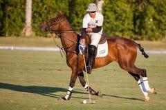 24 van Juli - Polo opleiding in San Enrique de Guadiaro, Cadiz, Spanje Stock Afbeelding