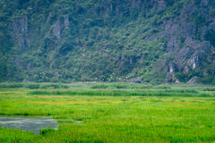 Van Long Nature Reserve en Ninh Binh Fotografía de archivo libre de regalías