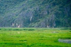 Van Long Reserve dove prenda il film Kong: Isola del cranio fotografia stock