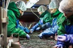 04 van Oktober 2017 - Vinnitsa, de Oekraïne Mensen aan het werk in prote Royalty-vrije Stock Fotografie