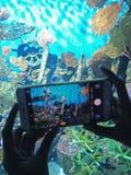 Van OVERZEES de Oceaanwereld het LEVENSbangkok stock afbeelding