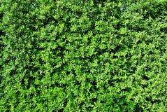 Van overzeese de bomenachtergrond Zandtexturegreen Stock Afbeeldingen