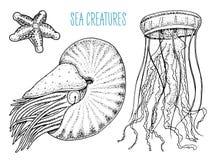 Van overzeese pompilius, de kwallen en de zeester schepselnautilus schaaldieren of weekdier of tweekleppig schelpdier gegraveerde Royalty-vrije Stock Afbeeldingen