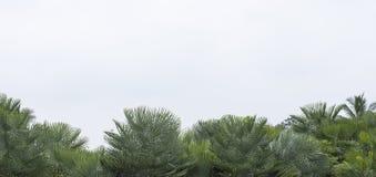 Van panas yang hijau van Latar belakang tropis musim daundan dengan tanaman palem yang eksotis royalty-vrije stock foto