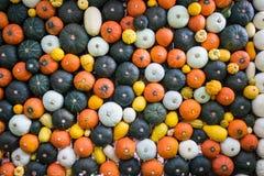 Van pompoenmuur, vruchten en groenten muur, gezonde muur Stock Foto