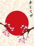 Van Sakura (kersenbloesem) de bloemenachtergrond Royalty-vrije Stock Foto