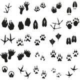 Van silhouetten dierlijke vogels en zoogdieren voetafdrukken geplaatst Vectorpictogrammen royalty-vrije illustratie