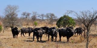 Van van Kruger Nationale Park, Limpopo en Mpumalanga provincies, Zuid-Afrika stock afbeelding