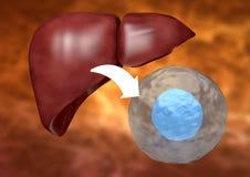van vid Ändring-cellen terapi återställer sjuk lever vektor illustrationer