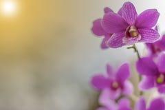 Van vid orkidér gör bakgrunden royaltyfria foton
