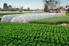 Pengzhou Kina: Plast- växthus på lantgård Royaltyfria Bilder