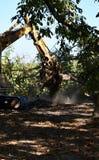 Van vid skogsavverkning av skoggrävskopan gräver upp träd-stubbar och rotar, efter skogen togs bort arkivbilder