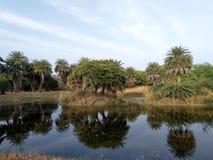 Van Vihar National Park Bhopal royaltyfri bild