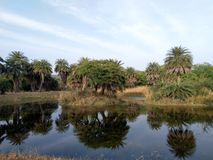 Van Vihar National Park Bhopal lizenzfreies stockbild