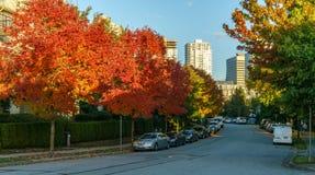 VANCÔVER, CANADÁ - 1º DE OUTUBRO DE 2017: A avenida de Euclid coloriu árvores em um dia do outono Fotos de Stock Royalty Free