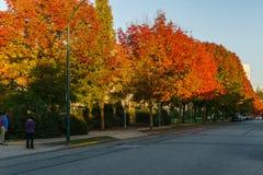 VANCÔVER, CANADÁ - 1º DE OUTUBRO DE 2017: A avenida de Euclid coloriu árvores em um dia do outono Imagem de Stock