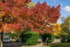 VANCÔVER, CANADÁ - 1º DE OUTUBRO DE 2017: Interseção de 12as árvores da avenida e do Ash Street Coloured em um dia ensolarado do  Fotos de Stock