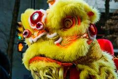 VANCÔVER, CANADÁ - 18 de fevereiro de 2014: Os povos em Lion Costume amarelo no ano novo chinês desfilam no bairro chinês de Vanc Fotos de Stock Royalty Free